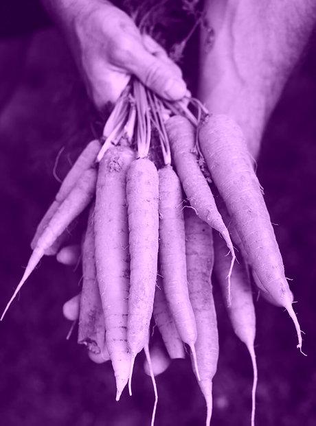 Fresh carrots organic vegetables healthy food PM45 SPV 1